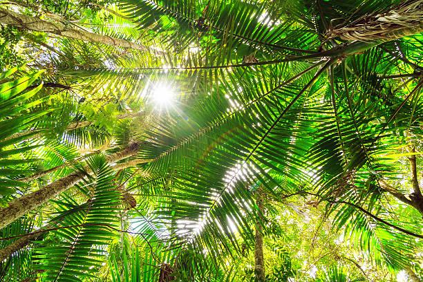 Green canopy – Foto