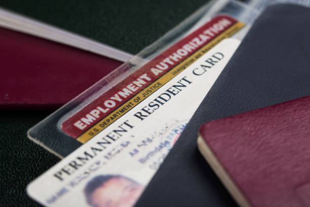 usa green card or permanent resident card and employment authorization card - permit stock photos and pictures