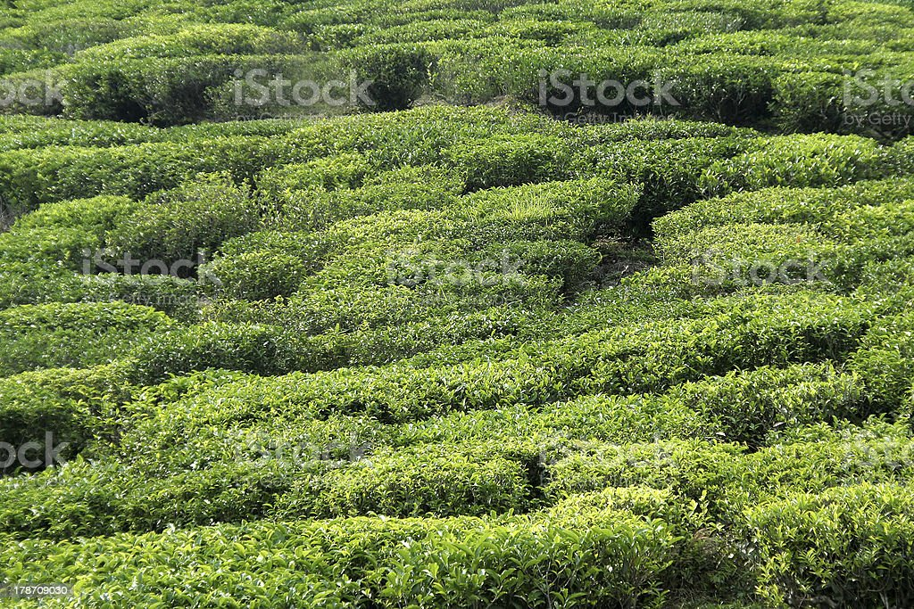Green Carpet stock photo