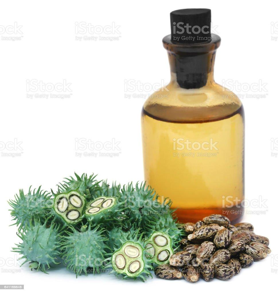Green castor beans stock photo