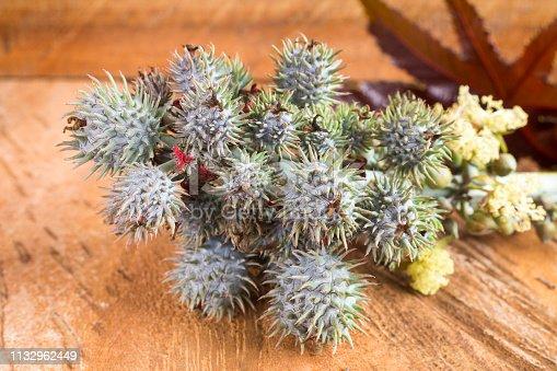 istock Green castor fruits - Ricinus communis 1132962449