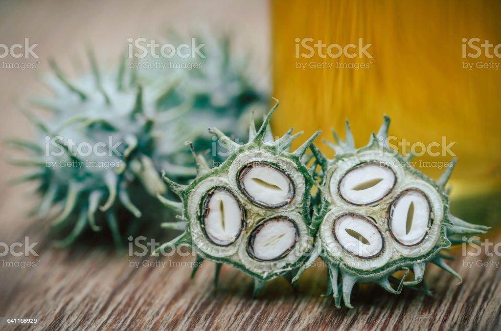 Green castor stock photo