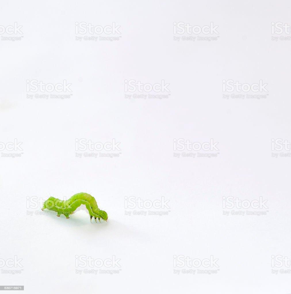 Caterpillar Verde - foto de acervo