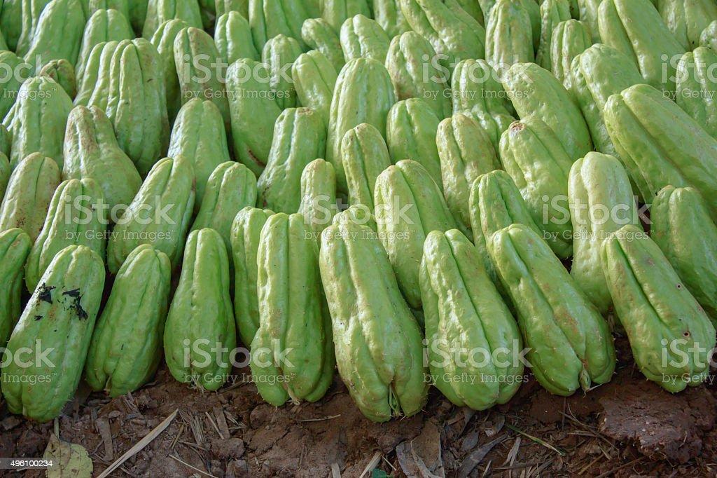 green chayote stock photo