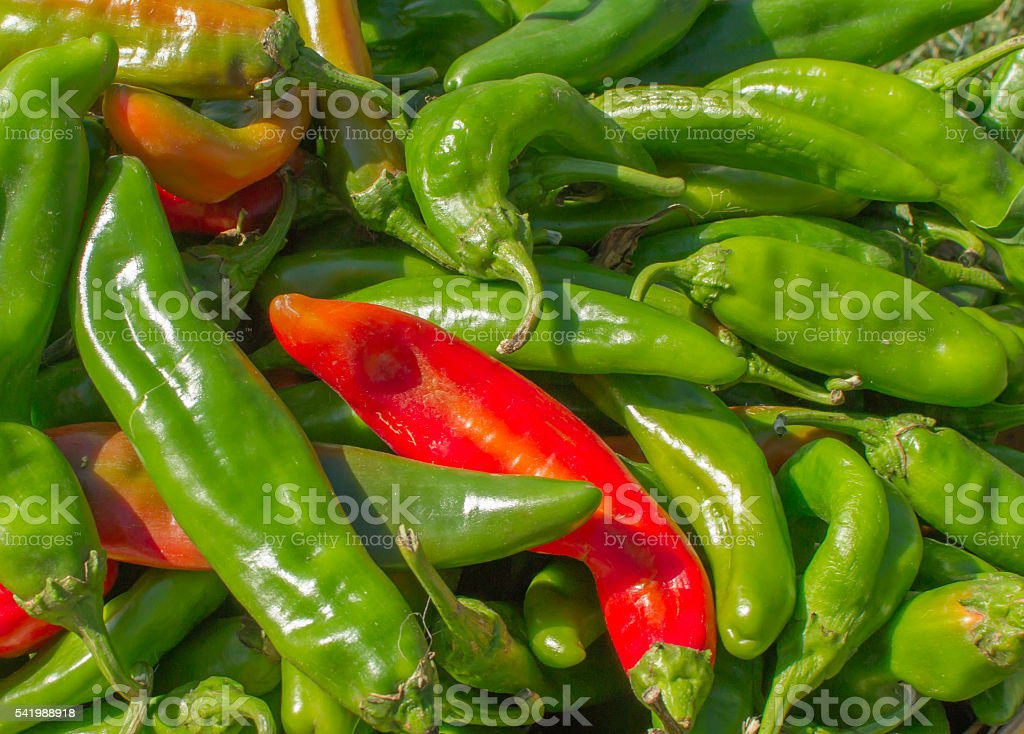 Green Chile Harvest stock photo