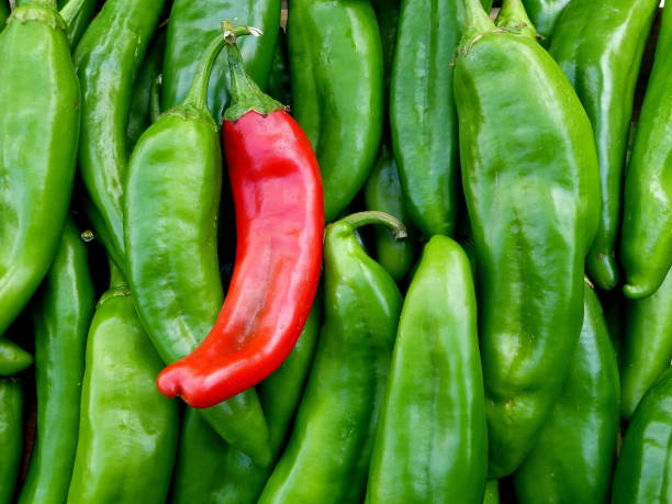 green chile - green chilli pepper stock photos and pictures