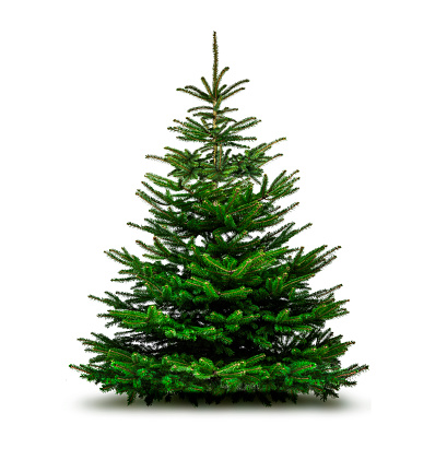 Green Christmas tree isolated on white background