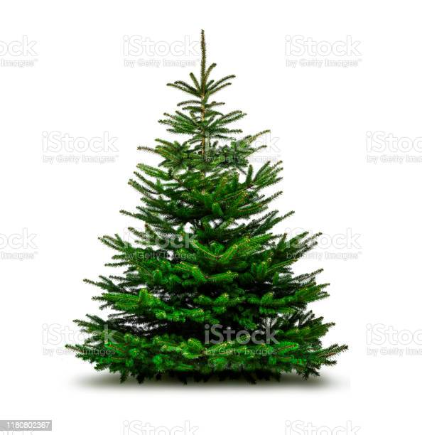 Photo of Green Christmas tree isolated on white background