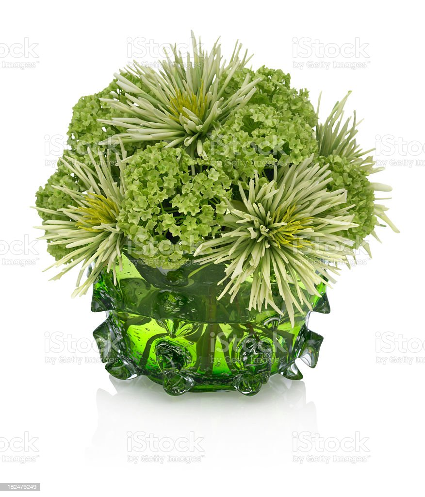 Green Chrysanthemum Bouquet on white background royalty-free stock photo