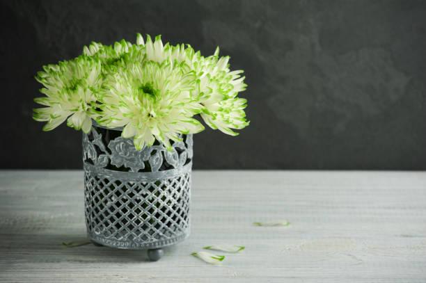 grünes chrysantheme im cltinay topf - zinn hochzeit stock-fotos und bilder