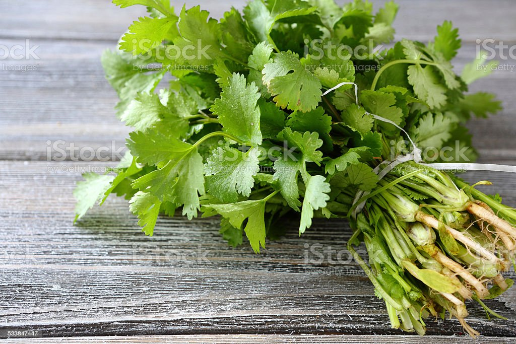 Green cilantro on a wooden boards stock photo
