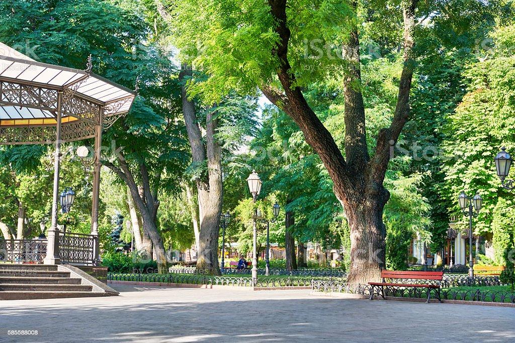 green city park at summer season, bright sunlight and shadows stock photo