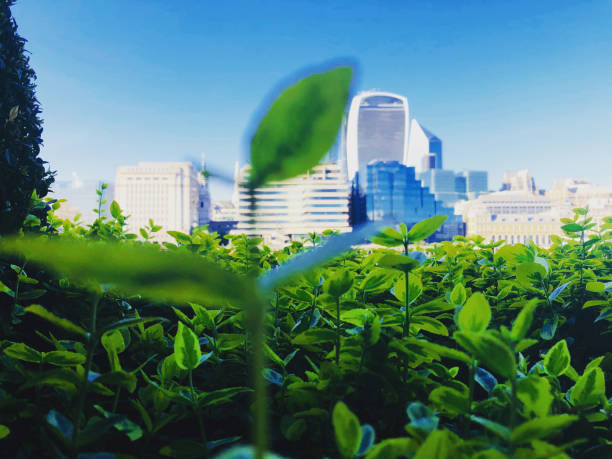 Green city The city is literally a jungle sustainable living stock pictures, royalty-free photos & images