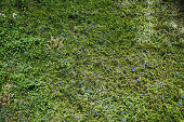 Aerial view of a summer glade full of greenery with small blue and white flowers; view from above of a spring meadow texture with grass and different plants, and flowers