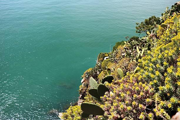 verde acantilados de corniglia cinco tierras, costa italia - opuntia robusta fotografías e imágenes de stock