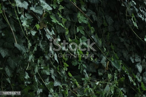 Close up of Green climbing bush leaves background