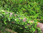High Angle View of Green Climbing Ivy Plants on Wood Log