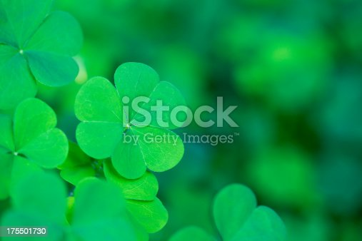 Bright classic clover background. Selective focus