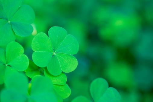Green Clover Background Horizontal
