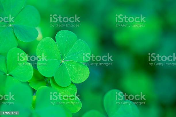 Green clover background horizontal picture id175501730?b=1&k=6&m=175501730&s=612x612&h=ou2jhp0n3rmy5hd2ybhqrg8v7w pktxey6p3gkmtgle=