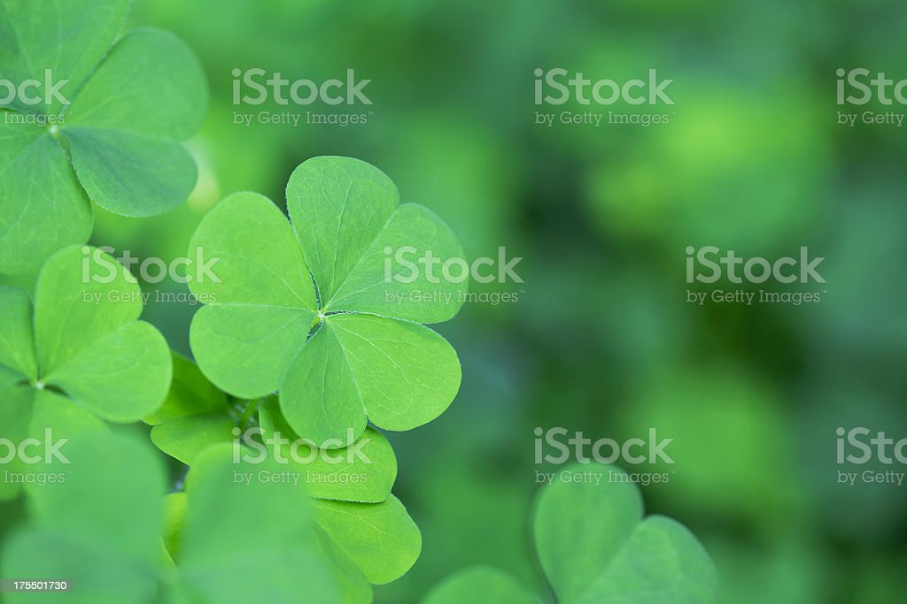 Green Clover Background Horizontal stock photo