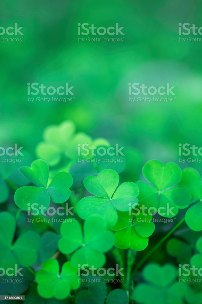 Green Clover Background Vertical stock photo