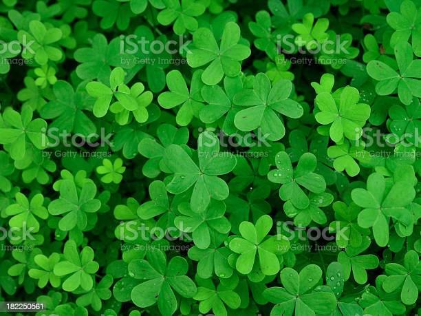 Green clover field picture id182250561?b=1&k=6&m=182250561&s=612x612&h=wpum6nqcg6ifw8tfqdiw8tixkmfysic3jz7ebnjdbro=