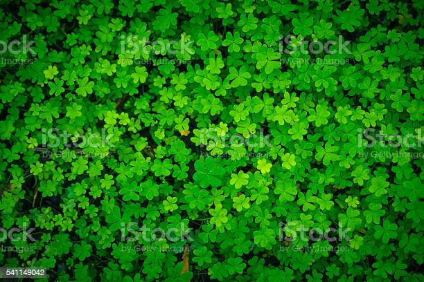 Green clover good luck irish holiday pattern picture id541149042?b=1&k=6&m=541149042&s=612x612&h=sl tab yyspgu azuuyxjkrwje9hsiwjbd73rds r i=