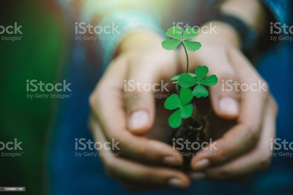 Folha de trevo verde na mão. - foto de acervo