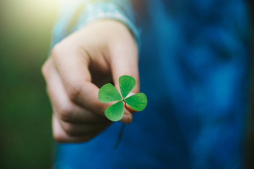 istock Green clover leaf in hand. 1009867484