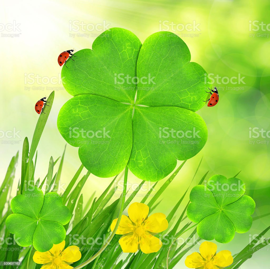 Green clover leaf with ladybugs stock photo