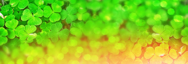 green clover leaves - st patricks days stock photos and pictures