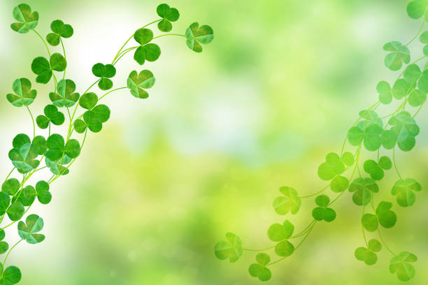 green clover leaves - luck of the irish stock photos and pictures