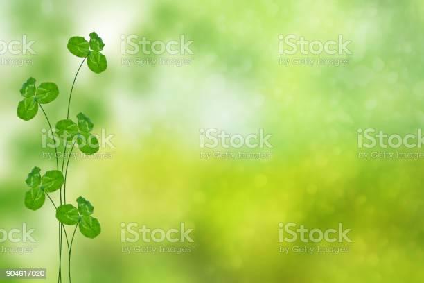 Green clover leaves picture id904617020?b=1&k=6&m=904617020&s=612x612&h= vko9bxe3uwvwuy cs0u1shchljey0nkmtdncm1jfoy=