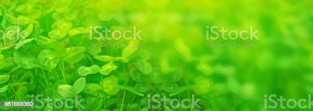 Green clover leaves picture id981669360?b=1&k=6&m=981669360&s=612x612&h=tv2th33smvix5q0vvfxy33xd4sfxq1 aypv5exm5oho=