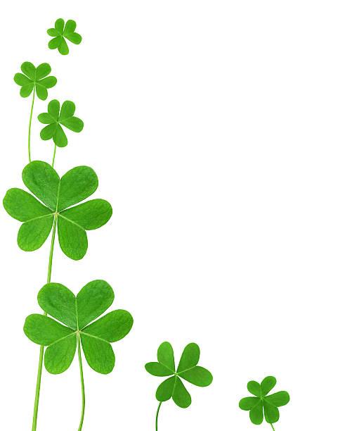 Green clover picture id155960157?b=1&k=6&m=155960157&s=612x612&w=0&h=l42rfymam2m73rhl6c77ypokk5oddyozkcwul8nvkwo=