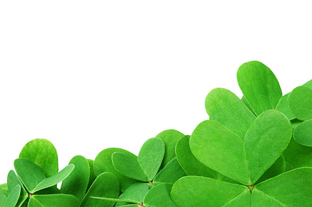 green clover - st patricks day food stock photos and pictures