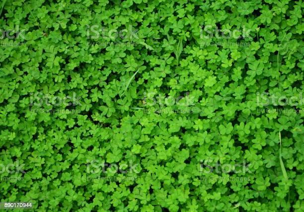 Green clover top view picture id890170944?b=1&k=6&m=890170944&s=612x612&h=nygjszp0vrdnx2jykwzn niknqsoumfmsdjaaq1blt8=