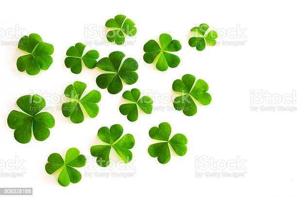 Green clovers on white background picture id506328188?b=1&k=6&m=506328188&s=612x612&h=gp2m2s1yu0chcndwbfsrlijctdxcts15irjkw43yybk=