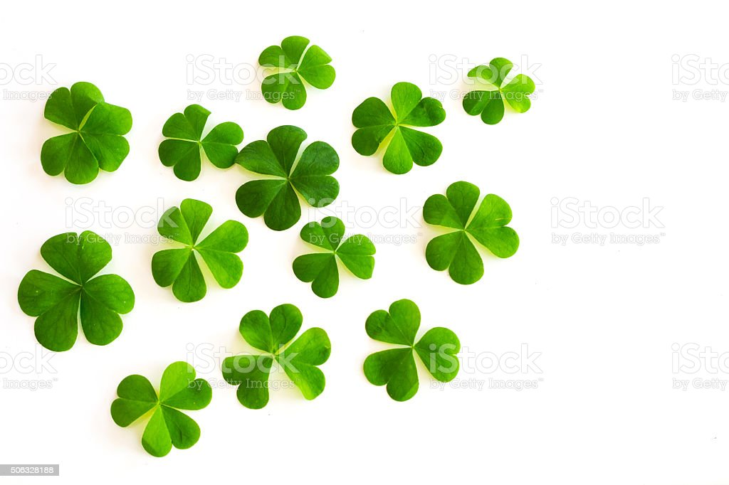 green clovers on white background stock photo