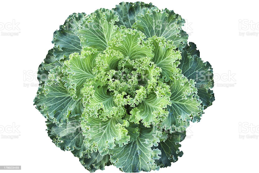 Green color cabbage isolate royalty-free stock photo