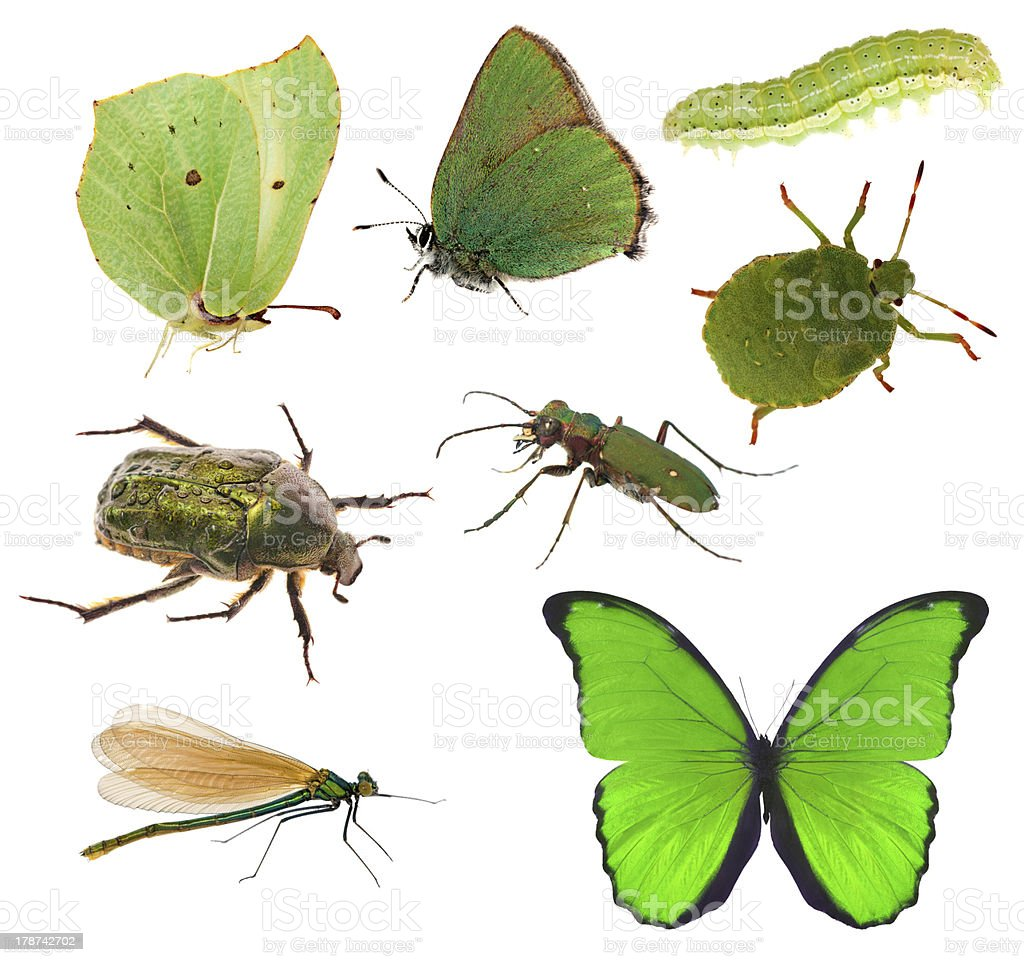 Green Color Insects Collection Isolated On White Stock Photo & More ...
