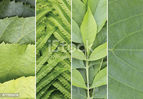 istock Green color samples collage. Summer  background. 877355416