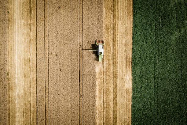 Grün Mähdrescher beim Ernten von Weizen auf einem Feld in Österreich – Foto