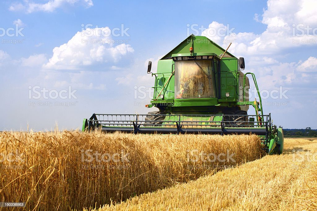 Green combine tractor harvesting wheat stock photo