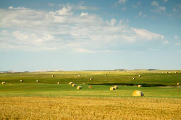Green Countryside in South Dakota stock photo