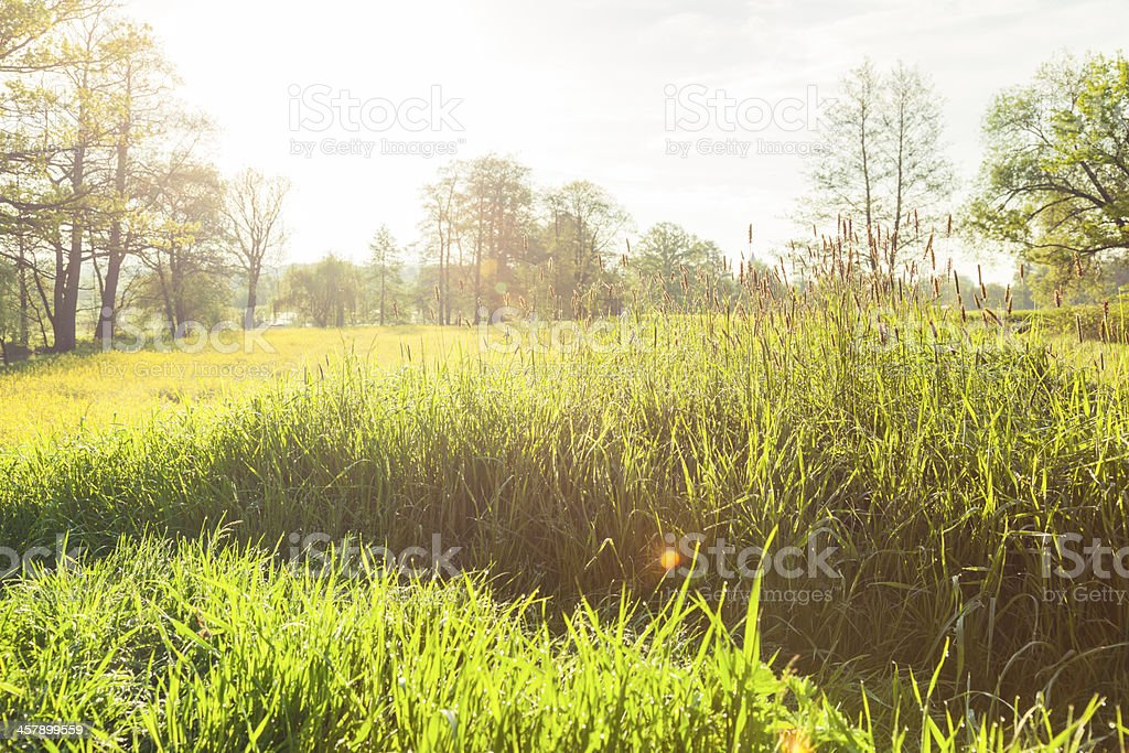 Green countryside royalty-free stock photo