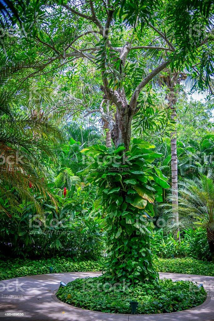 Grün mit tree – Foto