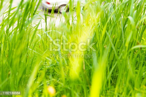 Green covering of meadows and fields soil - earth day