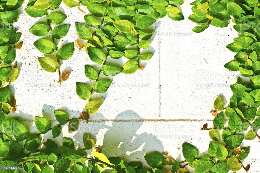 Green creeper royalty-free stock photo